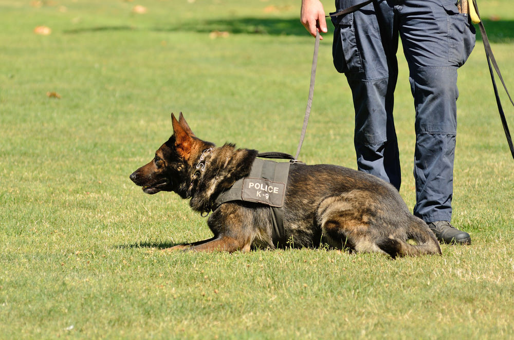 Sniffer Dogs the Future of Mining